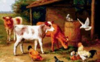 Выявление туберкулеза у коров, свиней, птиц и кошек, лечение, профилактика