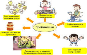 Функции пробиотиков